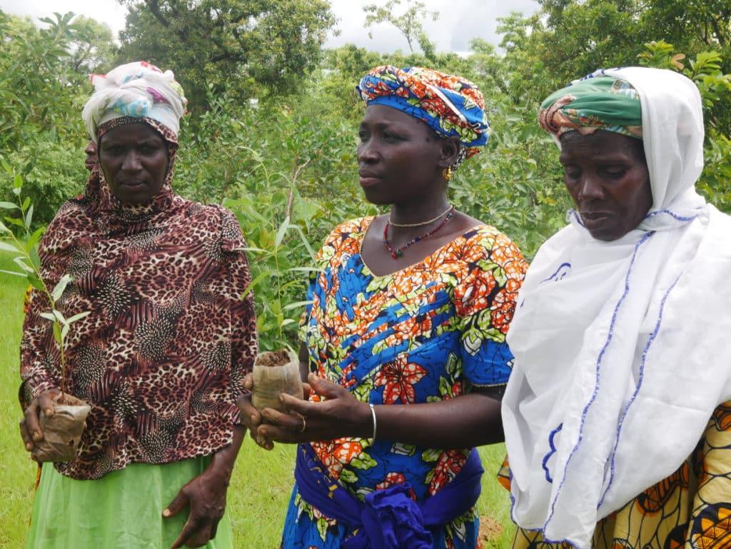 Des femmes ont bénéficié de plants d'arbres au Mali - association life ong