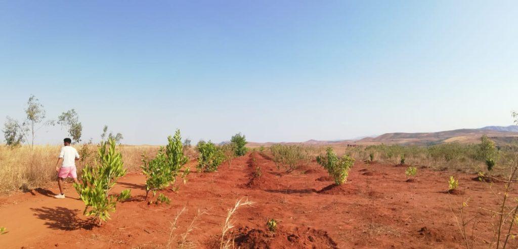 plantations arbres terres arides